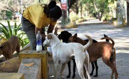 Sokak hayvanları nasıl beslenmeli?