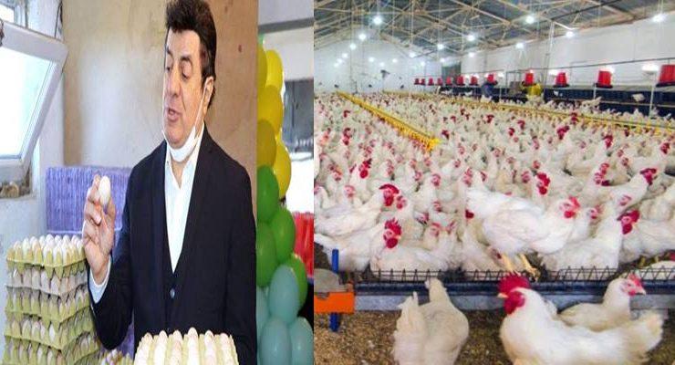 Yumurta üretim masrafları katlandı…